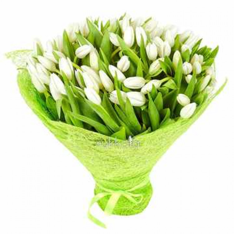 white-tulips-101-1