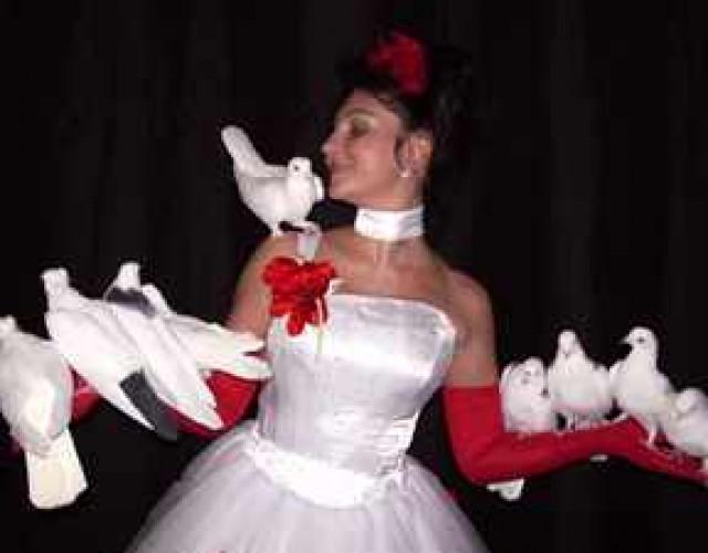 Белые голуби на свадьбу: приметы и обряды